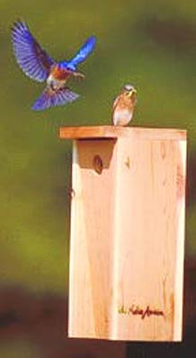 E. Bluebird pair on Native America nestbox