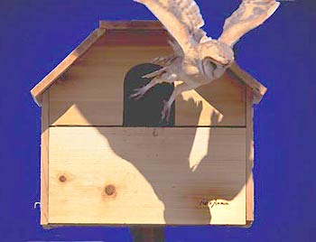 Bird Houses and Wildlife Nesting Boxes and Mounts by ...