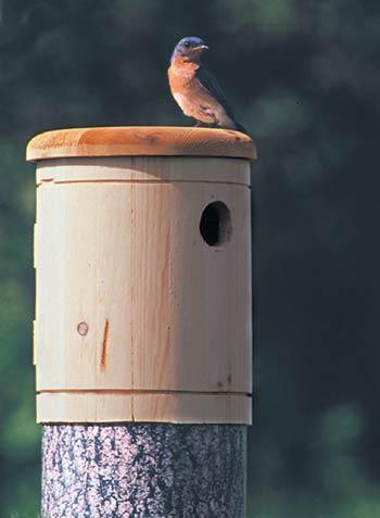 how to build a bluebird nesting box