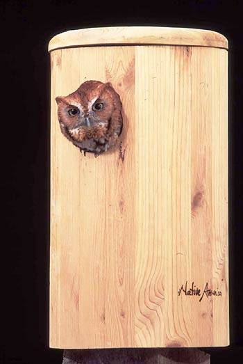 bird houses and wildlife nesting boxes and mountsnative america