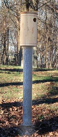Two Four Feet Tree Mirages with Wood Duck Nest Box
